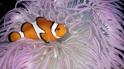 Le réchauffement climatique rend sourd les poissons